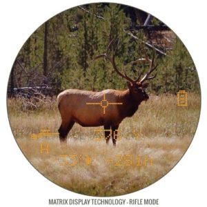 Hirsch im Visier des Bushnell Fernglases
